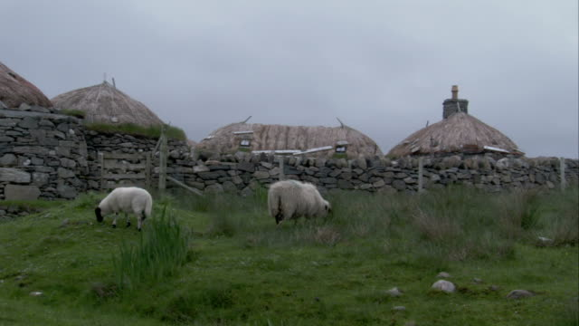 sheep graze in a pasture near cottages in black house village in gearrannan scotland. available in hd. - strohdach stock-videos und b-roll-filmmaterial