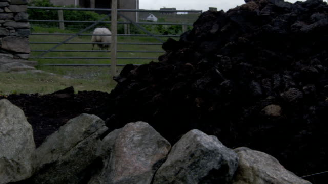a sheep grazes in a nearby pasture by a pile of black rocks. available in hd. - isole ebridi video stock e b–roll