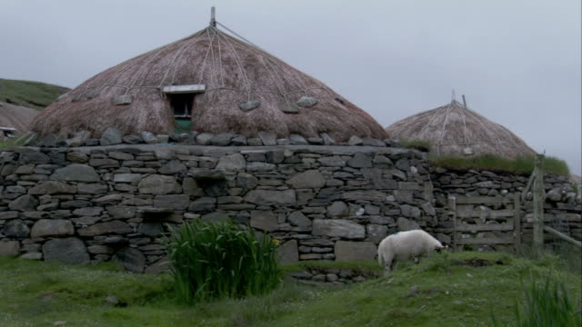 a sheep grazes on a grassy mound beside a black house in gearranna scotland. available in hd. - hebrides stock videos & royalty-free footage