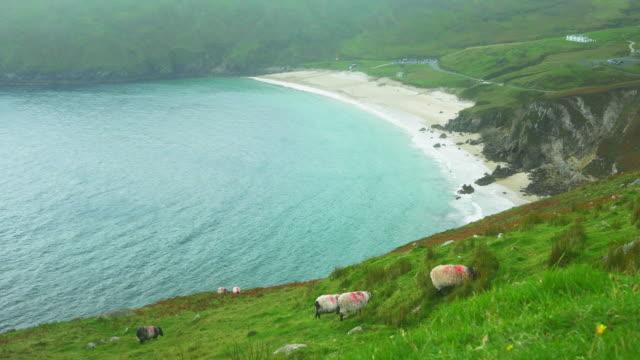 Schafe Grasen über der Bucht von Keem auf Achill Island