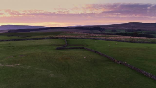 sheep grazing beneath dramatic sunset sky in yorkshire - drone shot - yorkshire england stock videos & royalty-free footage