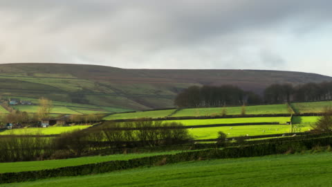 sheep grazing in pastoral landscape - time lapse - grazing stock videos & royalty-free footage