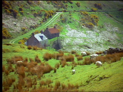 vidéos et rushes de sheep grazing on grassy hill / cottages in background / isle of skye, scotland - ferme bâtiment agricole
