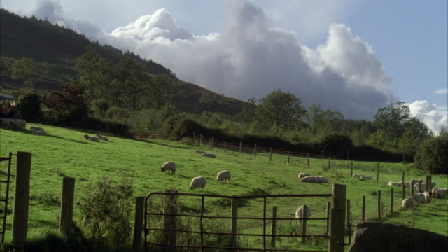 WS Sheep grazing on hillside / Unspecified