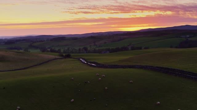 schafbeweidung auf yorkshire ackerland bei sonnenuntergang - luftbild - england stock-videos und b-roll-filmmaterial
