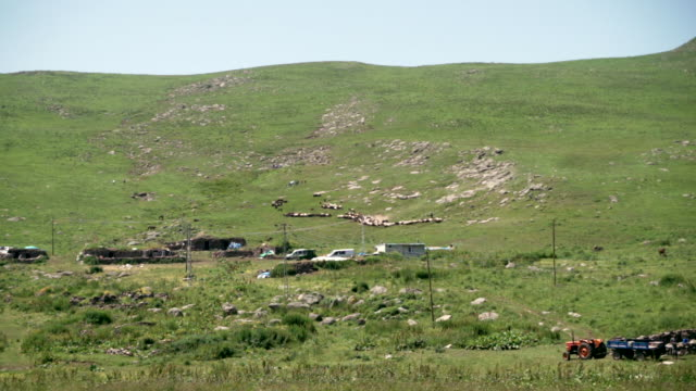 sheep herd - herder stock videos & royalty-free footage