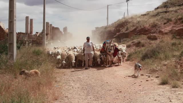 vídeos de stock e filmes b-roll de sheep herded in belchite - cena não urbana