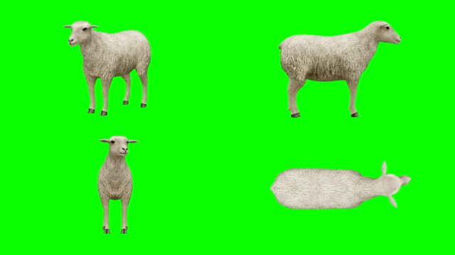 sheep idle green screen (loopable) - matte stock videos & royalty-free footage