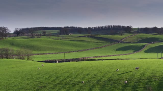 vídeos y material grabado en eventos de stock de ovejas en campo en valles de yorkshire - tiro del zumbido - yorkshire