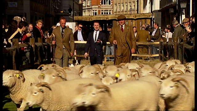 london savile row ext reporter to camera sack of wool road closed signs 'sheep ahead' sign reporter to camera harry parker interview sot pen of sheep... - savile row stock videos and b-roll footage