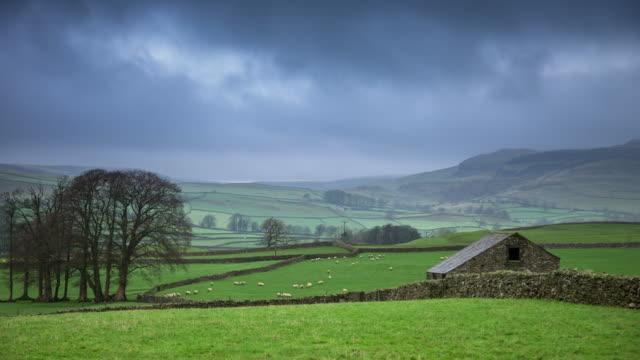 vidéos et rushes de moutons sous la pluie - time lapse - troupeau de moutons
