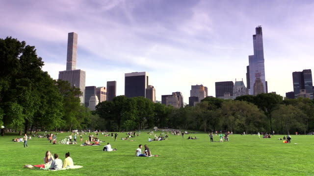 sheep meadow at central park in new york city - sheep meadow central park stock videos and b-roll footage