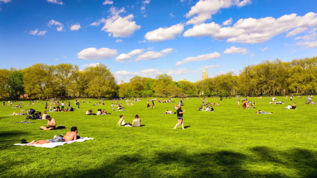 time lapse, sheep meadow, central park, new york city - sheep meadow central park stock videos and b-roll footage