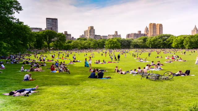 time lapse, sheep meadow, central park, new york city - central park manhattan stock videos & royalty-free footage