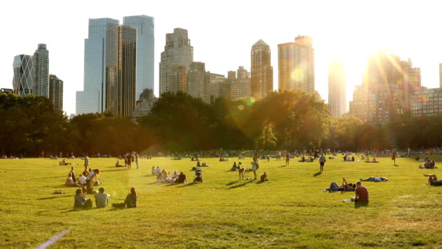 sheep meadow central park - park stock videos & royalty-free footage
