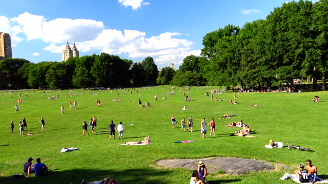 sheep meadow, summer time, central park, new york city - sheep meadow central park stock videos and b-roll footage