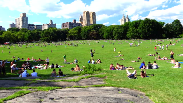 sheep meadow, summer time, central park, new york city - central park manhattan stock videos and b-roll footage