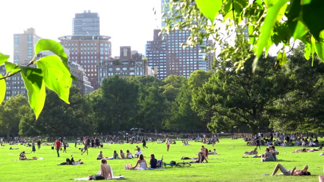 Sheep Meadow, Summer Time, Central Park, New York City