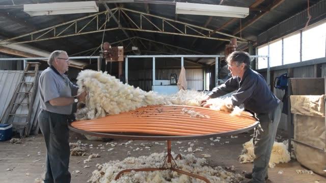 vídeos de stock e filmes b-roll de sheep shearing lancefield victoria australia wool sheep shearing victoria australia on february 10 2013 in lancefield australia - tosquiar