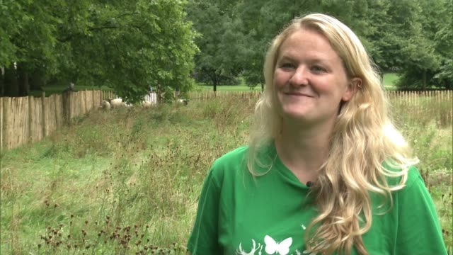 sheep to graze in london royal parks in bid to encourage wild meadows green park tom davis and helper rounding up flock of sheep in meadow/ dr alice... - meadow stock videos & royalty-free footage