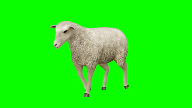 Sheep Walking Green Screen (Loopable)