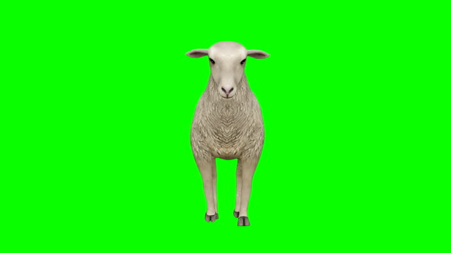sheep walking green screen (loopable) - sheep stock videos & royalty-free footage