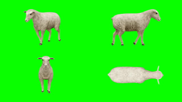 sheep walking green screen (loopable) - matte stock videos & royalty-free footage
