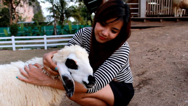 sheep with women - livestock stock videos and b-roll footage