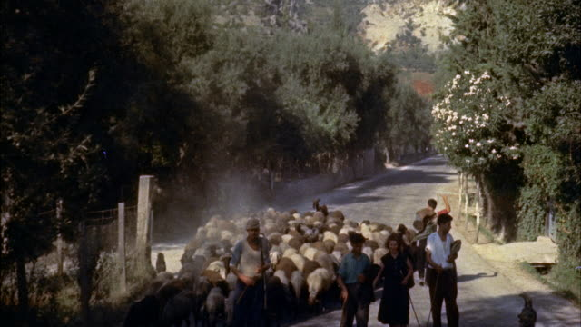 ms sheeps being driven on along italian road / italy - herding stock-videos und b-roll-filmmaterial