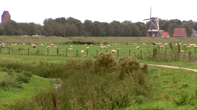 sheeps grazing, dutch windmill in the background - polder stock videos and b-roll footage