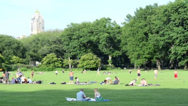 lapse sheep's meadow summer in central park manhattan new york city usa - sheep meadow central park stock videos and b-roll footage