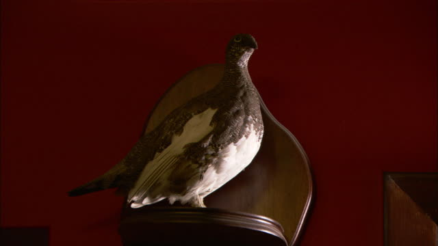 a shelf with a stuffed bird hangs on a red wall. - stuffed stock videos & royalty-free footage