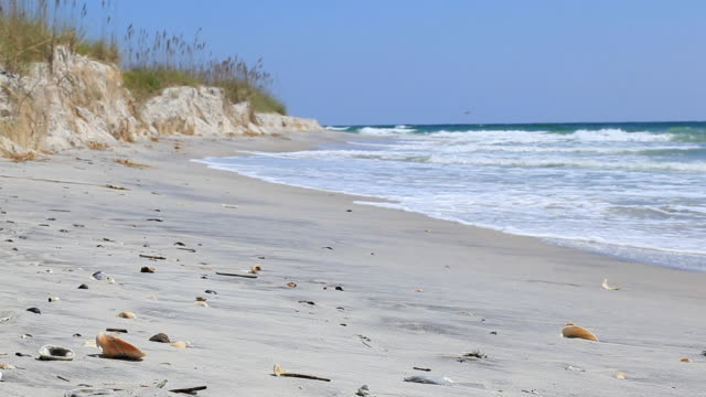 stockvideo's en b-roll-footage met shell beach focus on shells in the foreground - north carolina amerikaanse staat