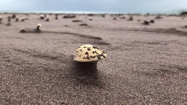shell, clam on an irish beach - animal shell stock videos & royalty-free footage