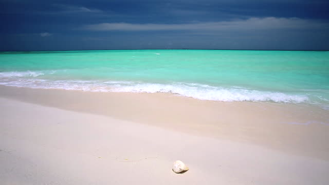 shell on a tropical beach, maldives - animal shell stock videos & royalty-free footage