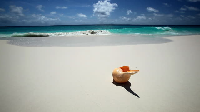 shell on a tropical beach, seychelles, indian ocean - conch stock videos & royalty-free footage