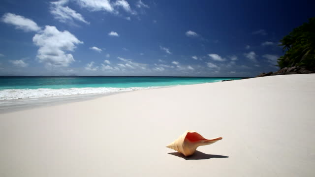 shell on a tropical beach, seychelles, indian ocean - animal shell stock videos & royalty-free footage