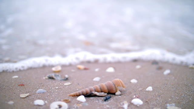 shell on the sand beach with sea wave - seashell stock videos & royalty-free footage