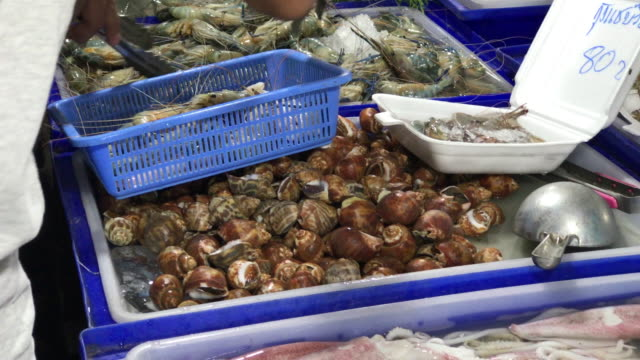 vídeos de stock e filmes b-roll de shell picking , choosing raw seafood for dinner , pattaya , thailand. - balde de gelo