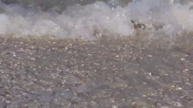 shells being washed over by small waves - seashell stock videos and b-roll footage