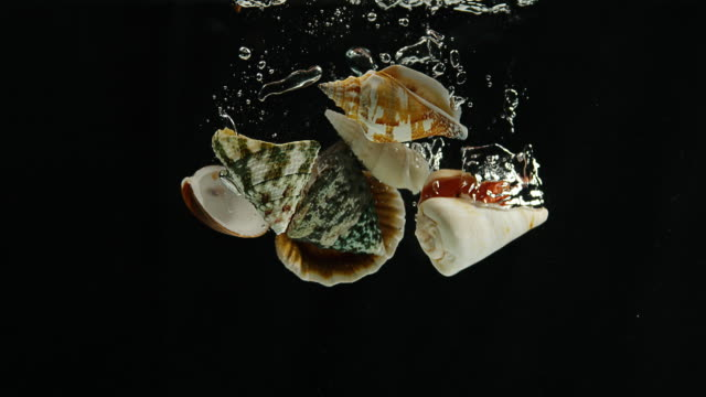 shells falling into water against black background, slow motion 4k - seashell stock videos & royalty-free footage