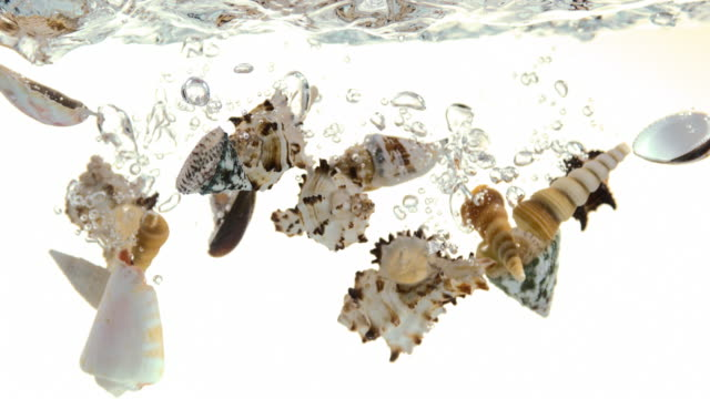 shells falling into water against white background, slow motion 4k - seashell stock videos and b-roll footage