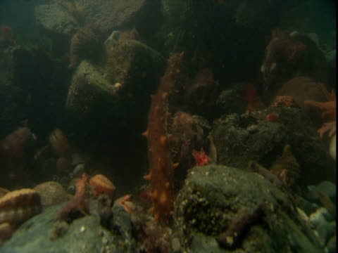 shells, starfish and corals litter the ocean floor. - anacortes stock videos & royalty-free footage