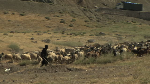 ws pan shepherd chasing sheep in field, atlas mountains, morocco - ovino video stock e b–roll