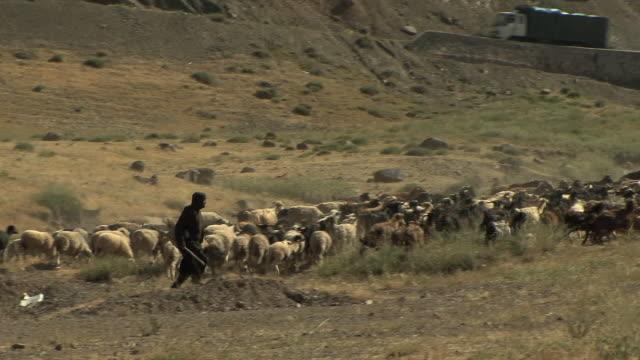 WS PAN Shepherd chasing sheep in field, Atlas mountains, Morocco