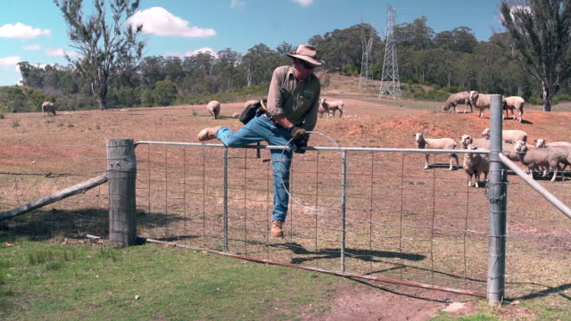 shepherd climbing over a fence - recinzione video stock e b–roll