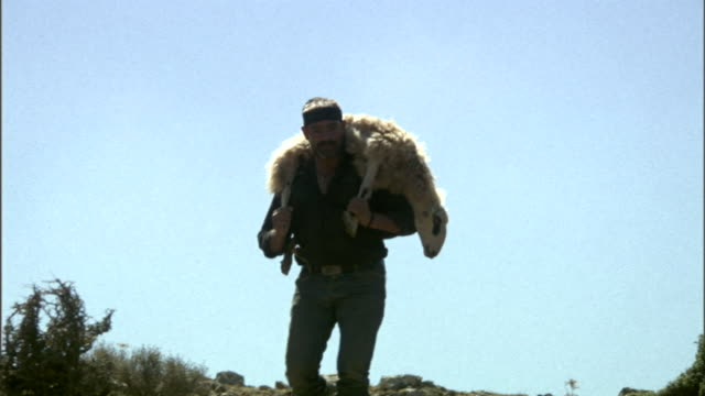 a shepherd descends a hill with a sheep on his shoulders in greece. - pastore mandriano video stock e b–roll