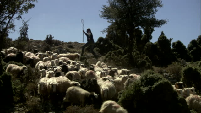 a shepherd herds sheep in greece. - shepherd stock videos & royalty-free footage