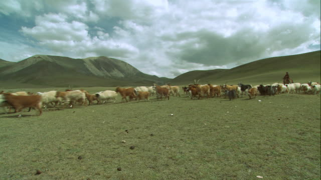 zi shepherd on horseback herding sheep and goats on vast plain / mongolia - independent mongolia stock videos and b-roll footage