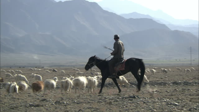 shepherd on horseback rounds up sheep. - recreational horseback riding stock videos & royalty-free footage